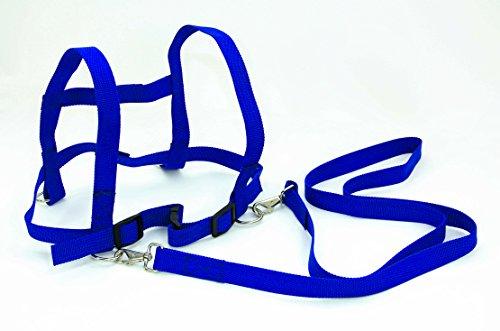 FLIXI Pferdeleine mit Sicherheits-Schnell-Verschluss für Kinder zum Spielen - robust