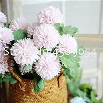 . Vente! 100 Pcs Plantes Pissenlit Famille Balcon Four Seasons Pot Plantes vivaces Fleur Plante pour la Maison de Plantation Jardin: 4