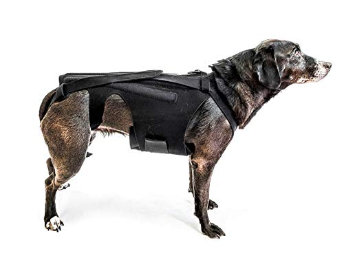 L'il Back Bracer Dog Back Brace for IVDD, Dog Back Pain, Arthritis, Good for Dachshunds, Corgies, Frenchies (Medium)