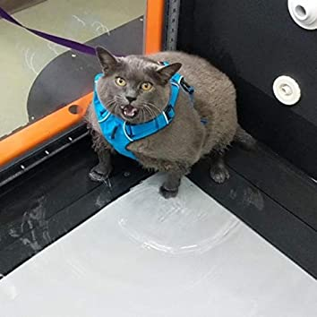 Cinderblock the Cat: A Weightloss Opera