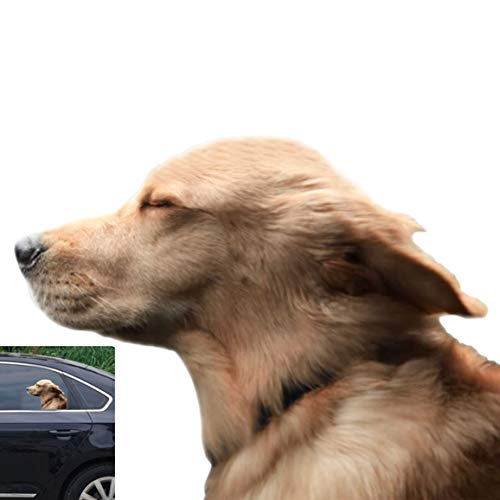 Toogod Riders Golden Retriever Car Sticker Window Decal for Vehicles Dog Window Cling(for Left Side)