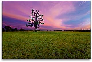 Premium textilduk 120 x 80 cm tvär, järnträd för solnedgång | väggbild, bild på kil ram, färdig bild på äkta kanvas, kanva...