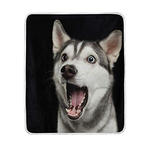 My Daily - Manta de microfibra de poliéster, diseño de perro Husky siberiano (50 x 152 cm)