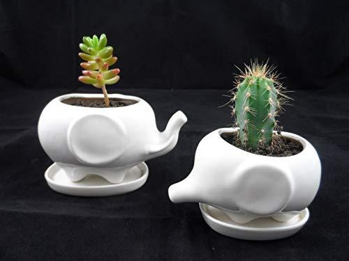R.EG: Vase Elefant Bonsai - 2 Stück Blumentöpfe mit Untersetzter - Keramik für Sukkulenten - Dekorvase