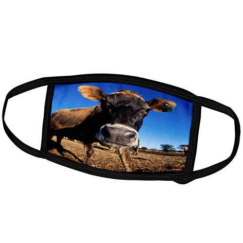 3dRose Face Mask Large, A Jersey Cow Being Inquisitive
