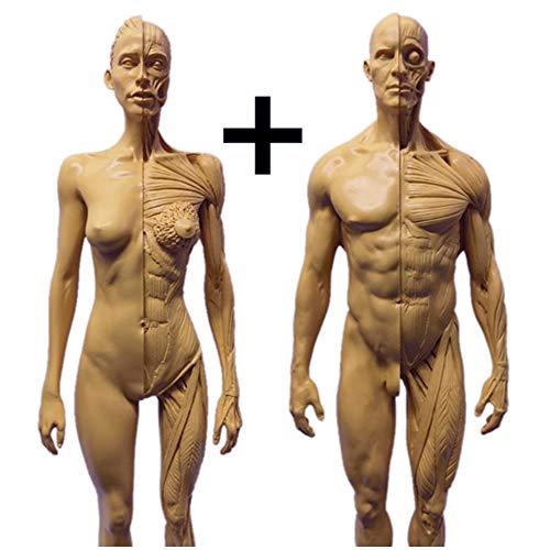 WJH 11inch Humana anatómica de Modelo de Resina del Cuerpo Humano musculoesqueléticos Modelo anatómico Arte Maniquí Estructura de Pintura Escultura