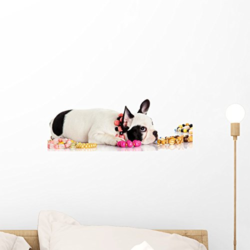 Wallmonkeys French Bulldog Wall Decal Peel and Stick Graphic WM203820 (18 in W x 8 in H)
