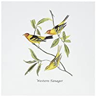BLNジョン・ジェームズ・オーデュボンコレクション–Western Tanager byジョン・ジェームズ・オーデュボン–グリーティングカード Set of 12 Greeting Cards