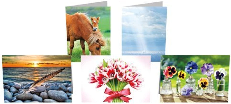Avanti Press Greeting autod Collection, 10 pezzi, bianco (32016 Press in Avanti)