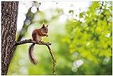 Wallario Garten-Poster Outdoor-Poster - Eichhörnchen auf