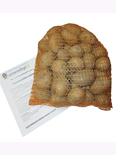 Samenshop24® Pflanzkartoffeln Belana, Inhalt: 2,5kg (ca. 35 Stück) Premium Saatkartoffeln, frühreifenden Kartoffelsorte, festkochend gelbfleischig lange lagerfähig