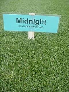 10LBS Midnight Kentucky Bluegrass Seed