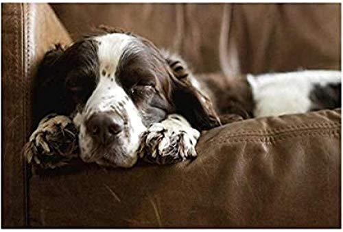 DFGJ Rompecabezas de 500 Piezas Springer Spaniel durmiendo en el sofá Juguete clásico para Adultos (52 * 38 cm)