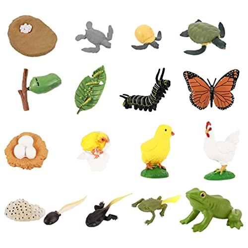 NUOBESTY Figuras del Ciclo de Vida de Rana Pollo Tortuga Marina Mariposa Figuras Modelo Animal Juguetes Educativos de Desarrollo para El Aprendizaje Y La Enseñanza