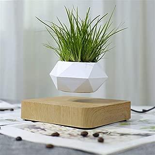 Kaneshin a vu pour Les Mini bonsa/ïs shohin Main No.84A Made in Japan FERRY Graines Bio Seulement Pas de Plantes