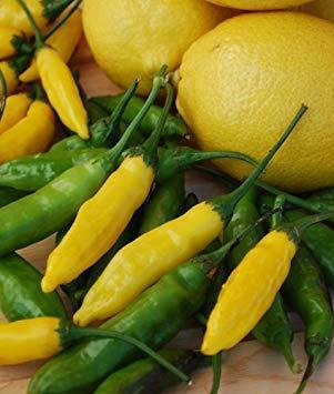 FERRY Keimfutter: 30 Samen von Lemon Drop - Paprika