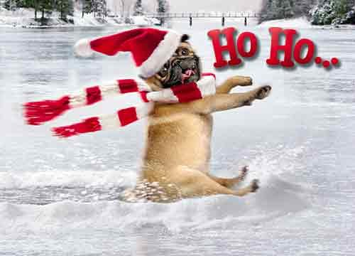 Avanti Christmas Cards, Skating Pug, 10 Count