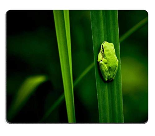 Green Animals Leaves Little Frogs Mouse padCustomized Game Mouse mat Rectangle Mouse mat