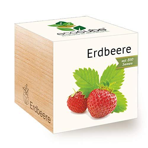 Feel Green Ecocube Erdbeere, Bio Samen, Nachhaltige Geschenkidee (100% Eco Friendly), Grow Your Own/Anzuchtset, Pflanzen Im Holzwürfel, Made in Austria