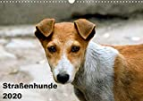 Straßenhunde (Wandkalender 2020 DIN A3 quer)