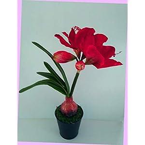 Artificial 15″ Deep Red Amaryllis Plant Artificial Silk Floral Flowers Bouquet Realistic Flower Arrangements Craft Art Decor Plant for Party Home Wedding Decoration