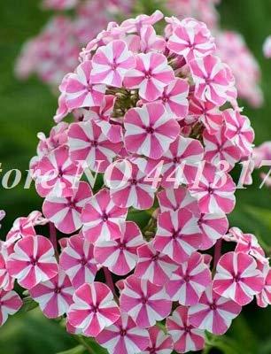 RETS 100 pcs Color Mezclado Petunias Colgantes seedss, el Crecimiento de la Petunia del jardín de la Petunia Seedss Natural para el jardín de la Flor Macetas Macetas: 10