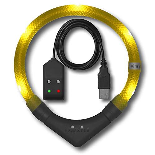 LEUCHTIE® Leuchthalsband Plus Easy Charge Sonnengelb Größe 35 I LED Halsband für Hunde I USB aufladbar I wasserdicht I extrem hell