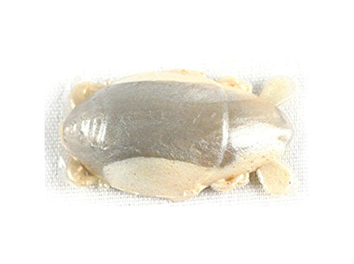 Gulp! Sand Crab Flea