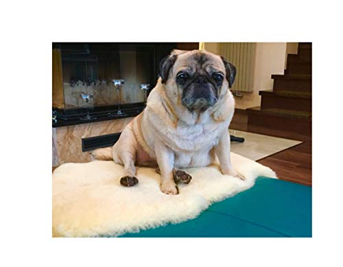 Merino-Lammfell für Hunde und Katzen. Strapazierfähiges Leder, medizinische Gerbung, 30°C waschbar. Echtes Leder. Geruchsarm, schadstoffarm. Deutsches Qualitätsprodukt. Länge ca.100 cm