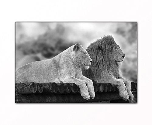 PB Art - Löwenpaar ALS Kunstdruck auf Leinwand und Holzkeilrahmen Qualität, handgefertigt in Deutschland! (70x90cm)