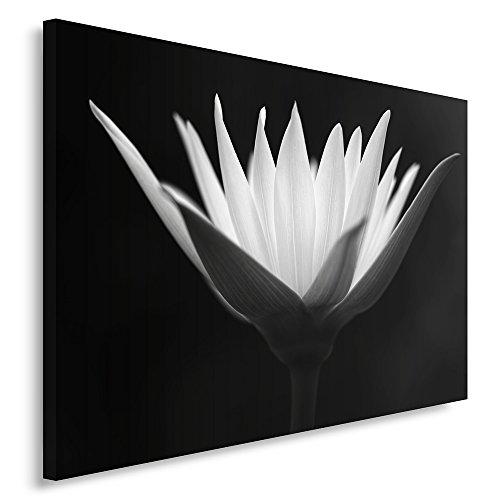 Feeby Frames, Cuadro en lienzo, Cuadro impresión, Cuadro decoración, Canvas 50x70 cm, FLOR EN FLOR, BLANCO Y NEGRO