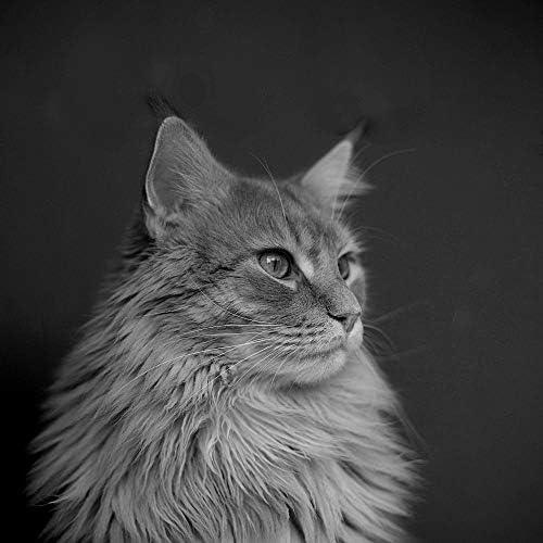 猫の音楽 ビンテージ