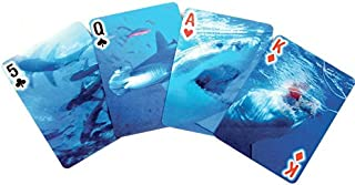 Best card shark de Reviews