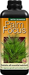 Balanced nutrition for palms in containers It is suitable for all palms whether in open ground, pots, indoors or outdoors Designed to support healthy vigorous growth Long term viability Simply mix 5ml of Palm Focus in 1 litre of clean water.