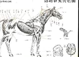 Manuel d'Acupuncture Vetérinaire - Pratique Moderne en République Populaire de Chine