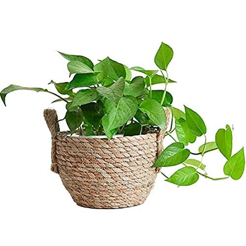 Main paille Panier de rangement en rotin tissé Seagrass ventre Plante en pot avec poignées pour le stockage de pique-nique Blanchisserie Pot de fleurs
