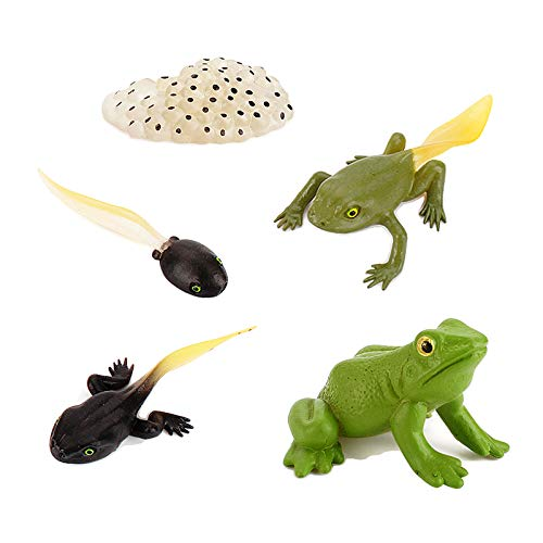 LiLiy Frog Life Cycle Set 5 Pcs,Growth Diary Figures ModelLearning Educational Aids Toys