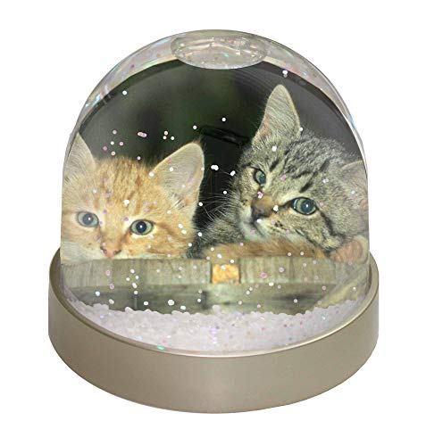 Advanta Kätzchen im Bierfass Schneekugel, Geschenk, Mehrfarbig, 9,2 x 9,2 x 8 cm