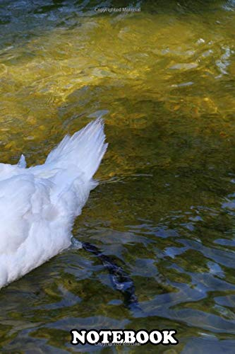 Notebook: Amazing Photography Of A Male Swan In The River , Journal for Writing, College Ruled Size 6