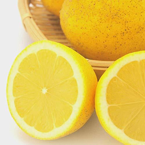 訳あり レモン 10kg れもん 愛媛県産 減農薬 栽培