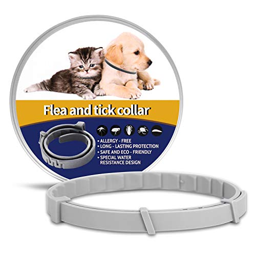 OSKIDE Pet Collar for Cats, Dog Collar Adjustable Waterproof - Safe - 12 Months...