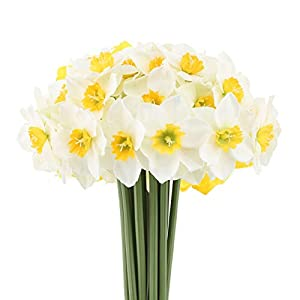Mossyard 2 Bunches 12 Heads Artificial Daffodils, 15.8 Inches Long Stem Blossom Silk Sun Flowers for Home Wedding Office Party Garden Decor, Floral Arrangements, Table Centerpieces