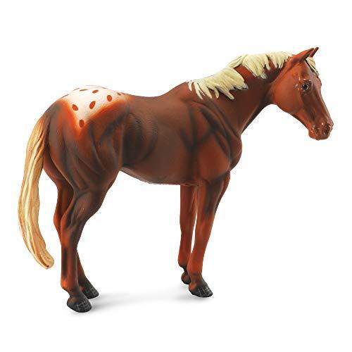 Cheval Appalossa - Etalon marron