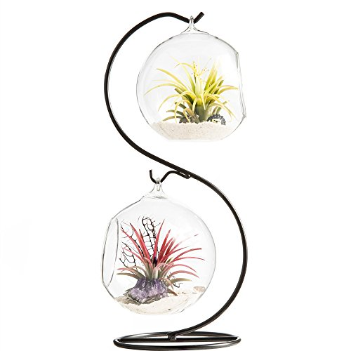 Glass terrarium with stand