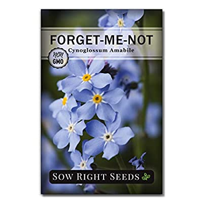 Forget-Me-Not Seed Packets to Plant