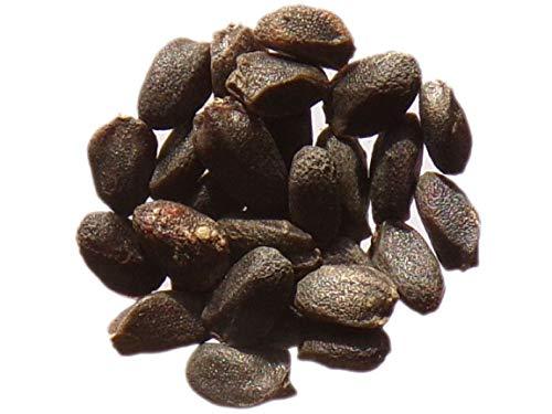Basilic Cannelle - 70 graines - Ocimum Basilicum - Basil - SEM06
