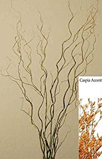 Green Floral Crafts Curly Willow Branches (Bunch of 8 Stems), 3-4Ft Tall, Basil-Oak & Caspia