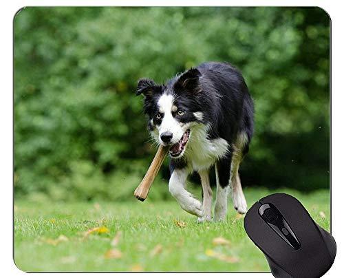 Gaming-Mauspad Porträt eines australischen Schäferhundes, Border-Collie-Mauspads