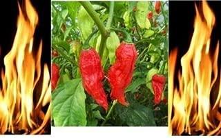 Seeds Red Bhut Jolokia Seeds Ghost Pepper Hot Chilli 900k-1m+ Shus Bulk Wholesale Get 1000 Seeds #EL01YN