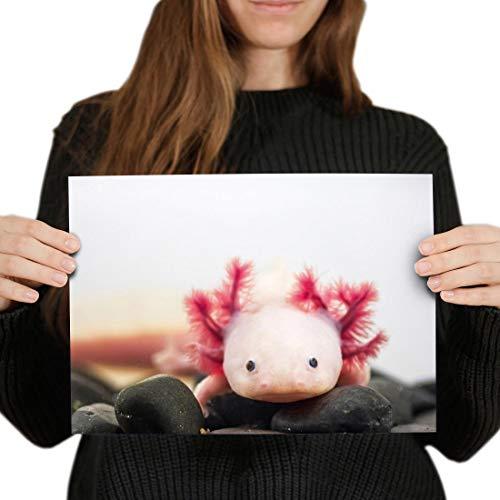 Destination Vinyl-Poster, A4, Axolotl Aquarium, Drachenfisch, 29,7 x 21 cm, 280 g/m², satiniertes Glanz-Fotopapier #3066